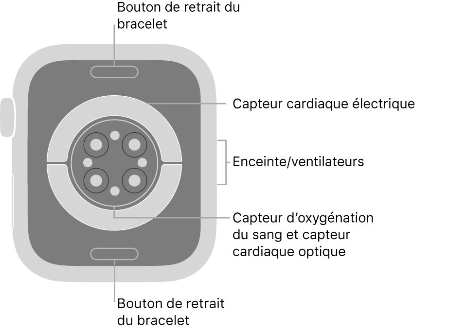 L'arrière de l'AppleWatch Series6, avec les boutons de retrait du bracelet en haut et en bas, les capteurs électriques de fréquence cardiaque, les capteurs optiques de fréquence cardiaque et les capteurs d'oxygénation du sang au milieu, ainsi que le haut-parleur et les aérations sur le côté.