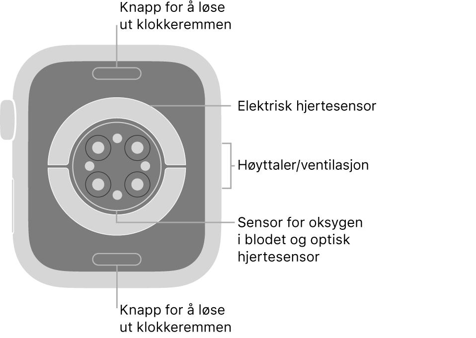 Baksiden av AppleWatch Series6, med remutløserknappene øverst og nederst, de elektriske pulssensorene, de optiske pulssensorene og sensorene for oksygen i blodet i midten og høyttaleren/luftventilene på siden.