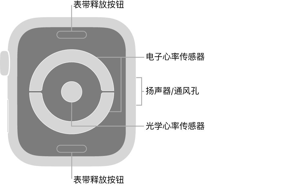 Apple Watch Series 4 和 Apple Watch Series 5 的背面,顶部和底部是表带释放按钮,中间是电子心率传感器和光学心率传感器,手表侧边是扬声器/通风孔。