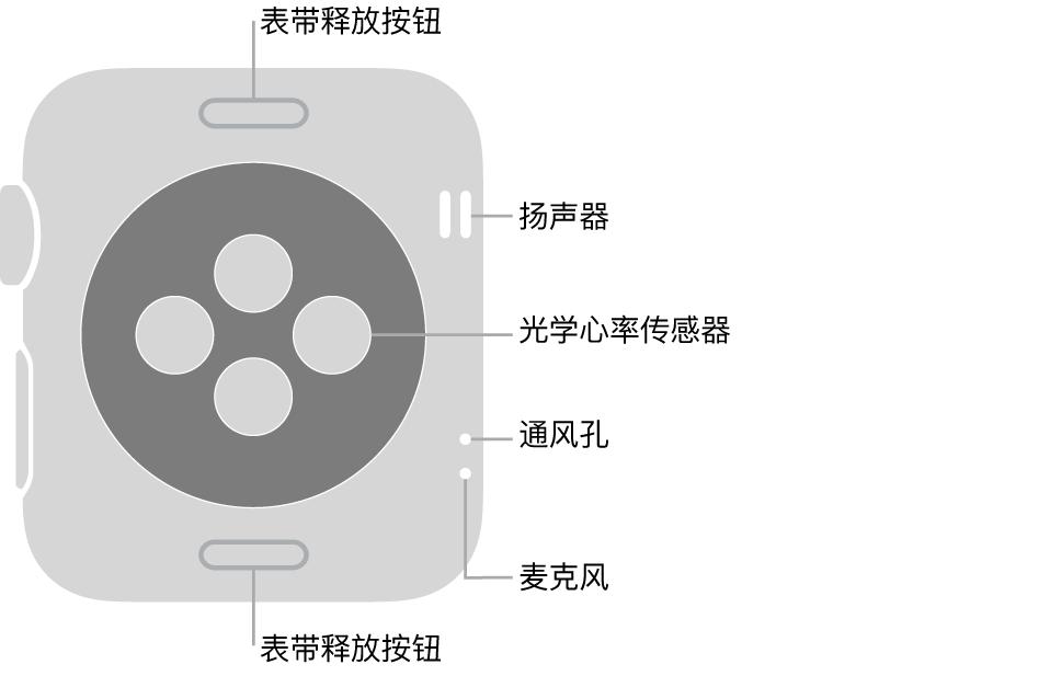 Apple Watch Series 3 的背面,顶部和底部是表带释放按钮,中间是光学心率传感器,侧边附近从上到下依次是扬声器、通风孔和麦克风。