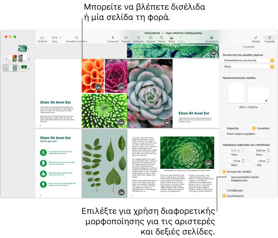 Το παράθυρο του Pages με μικρογραφίες σελίδων και σελίδες εγγράφου που προβάλλονται ως δισέλιδα. Στην πλαϊνή στήλη «Έγγραφο» στα δεξιά, το πλαίσιο επιλογής «Αριστερή/Δεξιά σελίδα διαφορετικές» είναι μη επιλεγμένο.