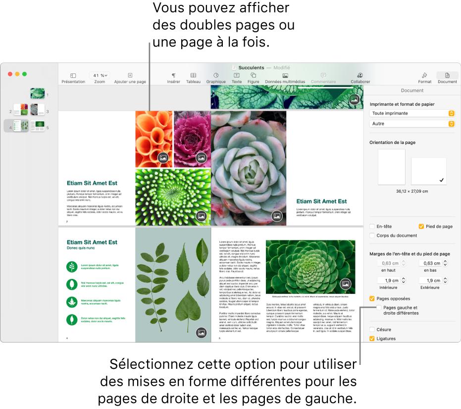 La fenêtre Pages avec les vignettes de page et les pages du document présentées sous forme de doubles pages. Dans la barre latérale Document sur la droite, la case «Pages gauche et droite différentes» est décochée.