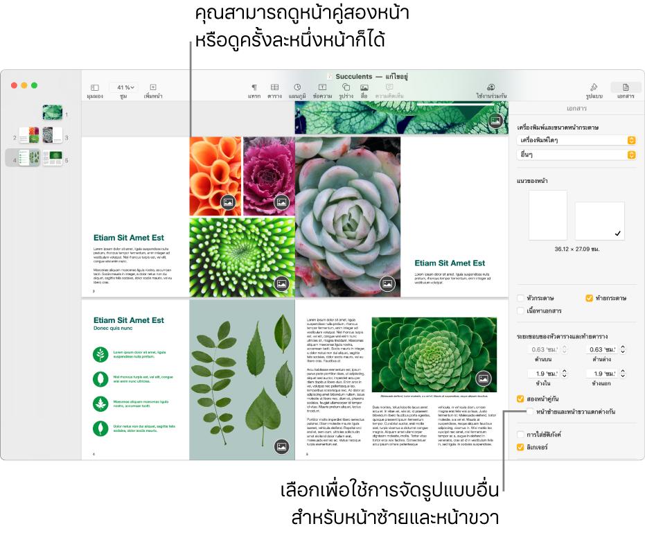 """หน้าต่าง Pages ที่มีรูปย่อของหน้าและหน้าของเอกสารที่ถูกดูเป็นหน้าคู่แบบต่อเนื่องกัน ในแถบด้านข้างเอกสารด้านขวา กล่องกาเครื่องหมาย """"หน้าซ้ายและหน้าขวาแตกต่างกัน"""" ไม่ได้ถูกเลือกอยู่"""