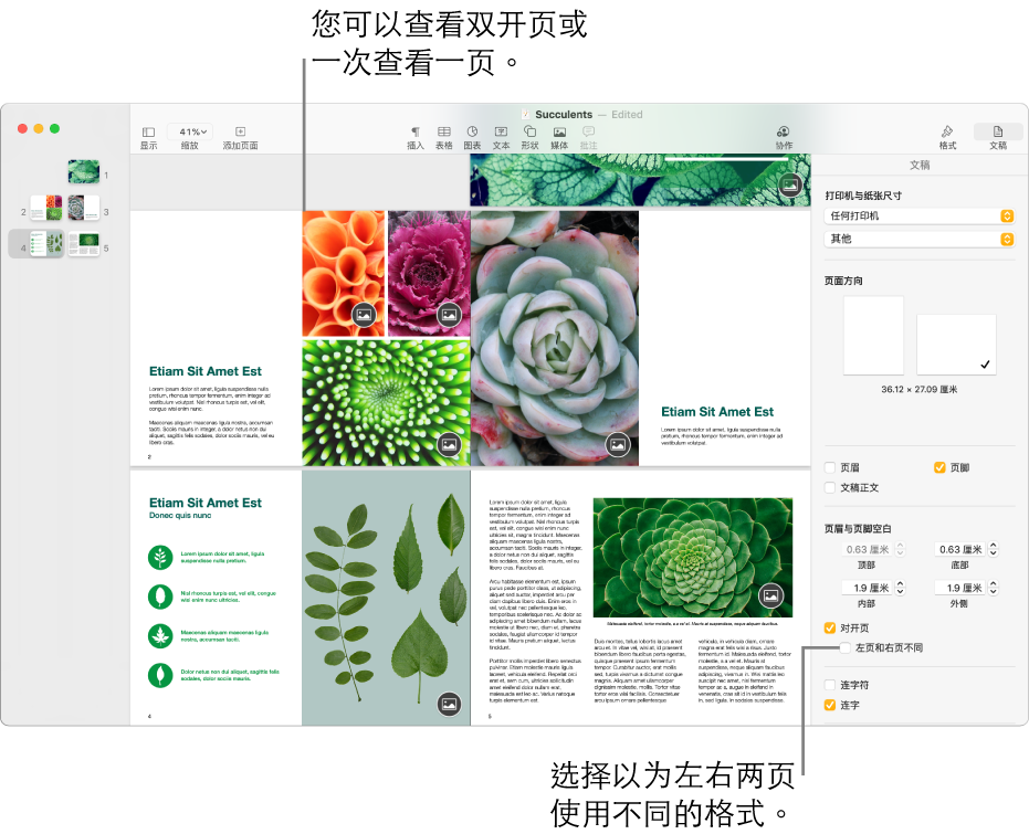 """Pages 文稿窗口,其中页面缩略图和文稿页面显示为跨页。在右侧的""""文稿""""边栏中,""""左页和右页不同""""复选框未选中。"""