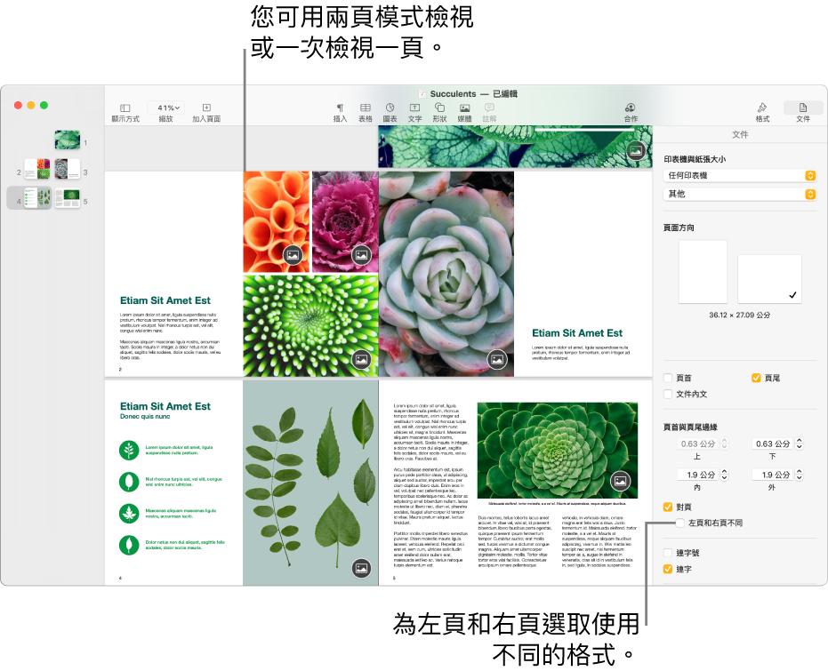帶有頁面縮覽圖和以雙頁全開檢視文件頁面的 Pages 視窗。在右側的「文件」側邊欄中,「左頁和右頁不同」註記框為未選取狀態。