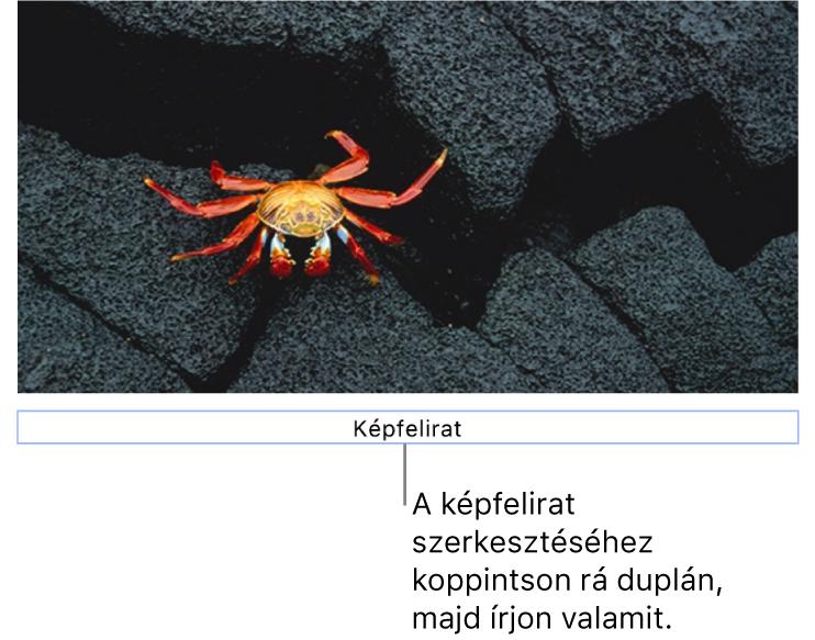 """A helyőrző képfelirat """"Képfelirat"""" egy fotó alatt látható, míg a képfelirat mező körül látható kék körvonal azt jelzi, hogy a mező ki van jelölve."""