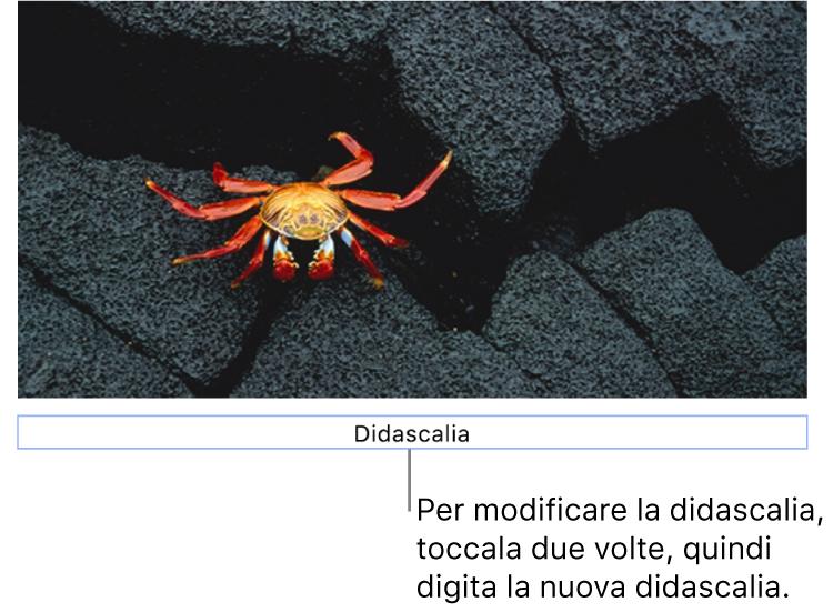 """La didascalia segnaposto """"Didascalia"""" viene visualizzata sotto una foto e un contorno blu attorno al campo della didascalia indica che è stata selezionata."""
