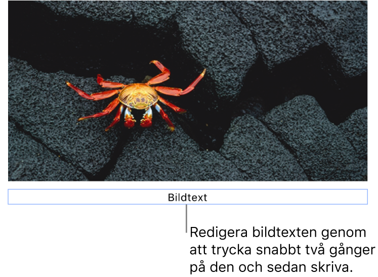 Platshållarbildtexten Bildtext visas under en bild. Den blå konturen runt bildtextfältet visar att det är valt.