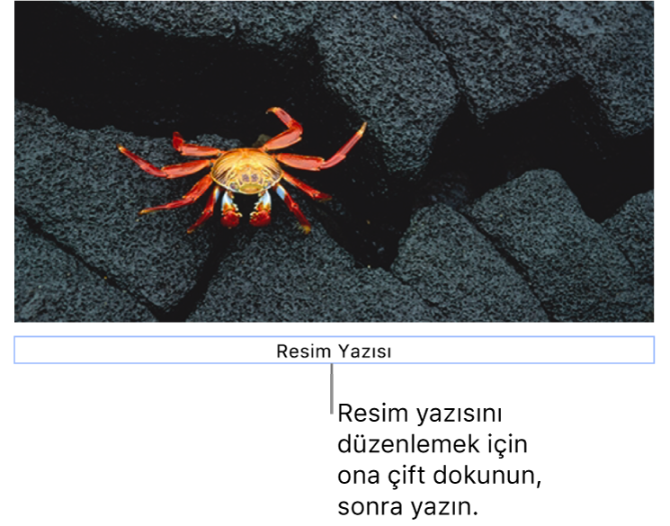 """Yer tutucu resim yazısı (""""Resim Yazısı"""") bir fotoğrafın altında görünür, resim yazısı alanının çevresindeki mavi kontur resim yazısının seçildiğini gösterir."""