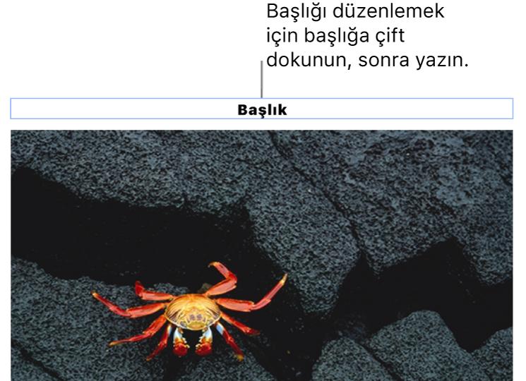 """Yer tutucu başlık (""""Başlık"""") bir fotoğrafın altında görünür, başlık alanının çevresindeki mavi kontur resim yazısının seçildiğini gösterir."""