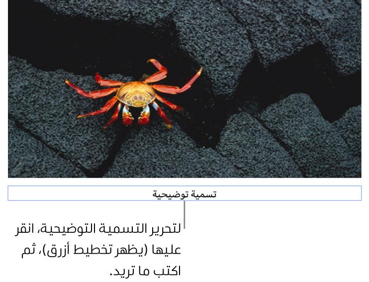 """تظهر التسمية التوضيحية للعنصر النائب، """"التسمية التوضيحية""""، أسفل صورة؛ يوضح تخطيط أزرق حول حقل التسمية التوضيحية أنه محدد."""