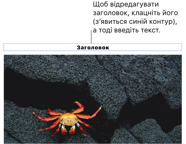 Зразок «Заголовок» відображається під фотографією, синій контур довкола поля заголовку вказує, що його вибрано.