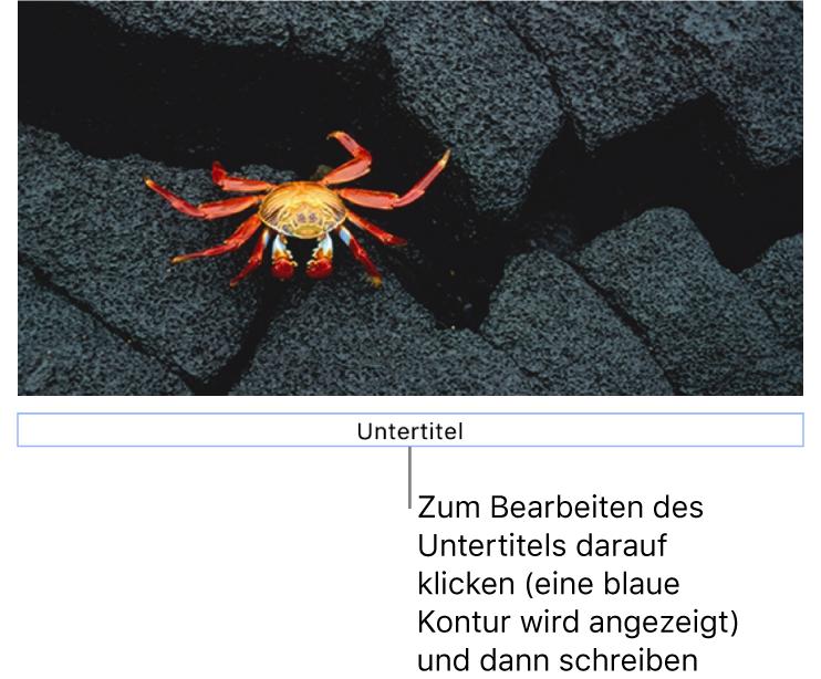 """Der Platzhalter-Untertitel """"Untertitel"""" erscheint unter einem Foto, ein blauer Rahmen um das Untertitelfeld gibt an, dass es ausgewählt ist."""