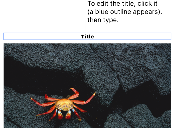 """The placeholder title, """"Title"""", appears below a photo; a blue outline around the title field shows it's selected."""