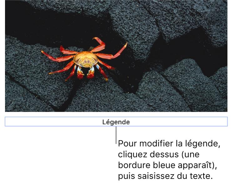 Le paramètre fictif de légende, «Légende», s'affiche sous une photo; un contour bleu autour du champ de légende indique qu'il est sélectionné.