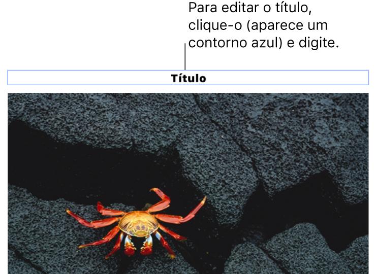 """O marcador de posição de título, """"Título"""", aparece abaixo de uma foto. Um contorno azul ao redor do campo de título mostra que ele está selecionado."""