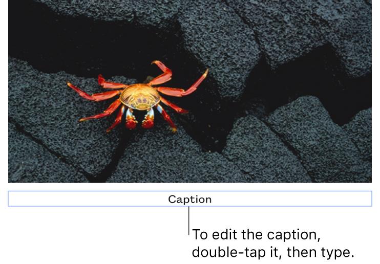 """The placeholder caption, """"Caption,"""" appears below a photo; a blue outline around the caption field shows it's selected."""