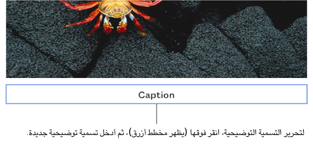"""تظهر التسمية التوضيحية للعنصر النائب، """"التسمية التوضيحية"""" أسفل صورة؛ يظهر التخطيط الأزرق حول حقل التسمية التوضيحية المحدد."""