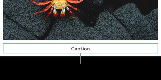 写真の下にプレースホルダーのキャプション「キャプション」が表示されています。選択されているキャプションフィールドの周りには青い枠が表示されます。