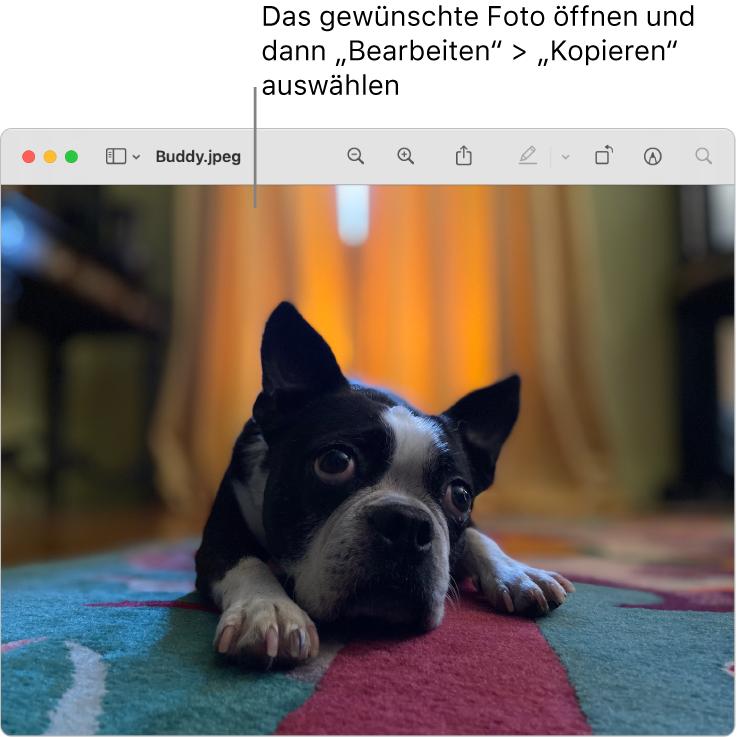 """Die App """"Vorschau"""" zeigt ein zu kopierendes Bild an."""