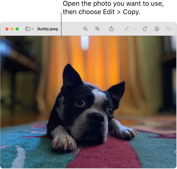The Preview app showing a picture to be copied.