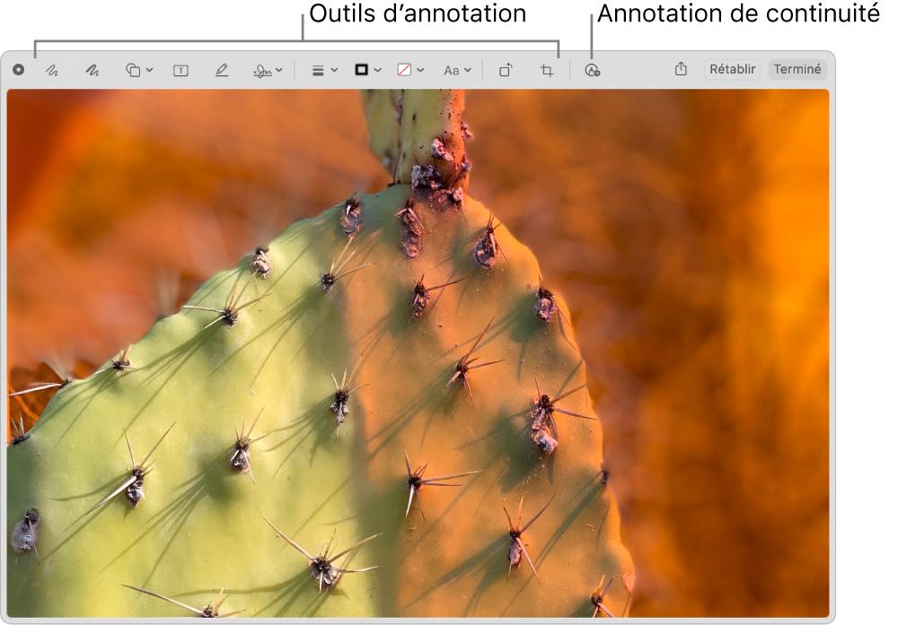 Une image de la fenêtre Annotation affichant la barre d'outils Annotation et l'outil sur lequel cliquer pour utiliser Annotation de continuité sur un iPhone ou iPad à proximité.