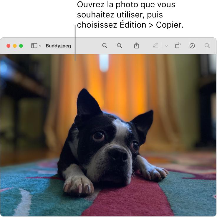 L'app Aperçu affichant une image à copier.