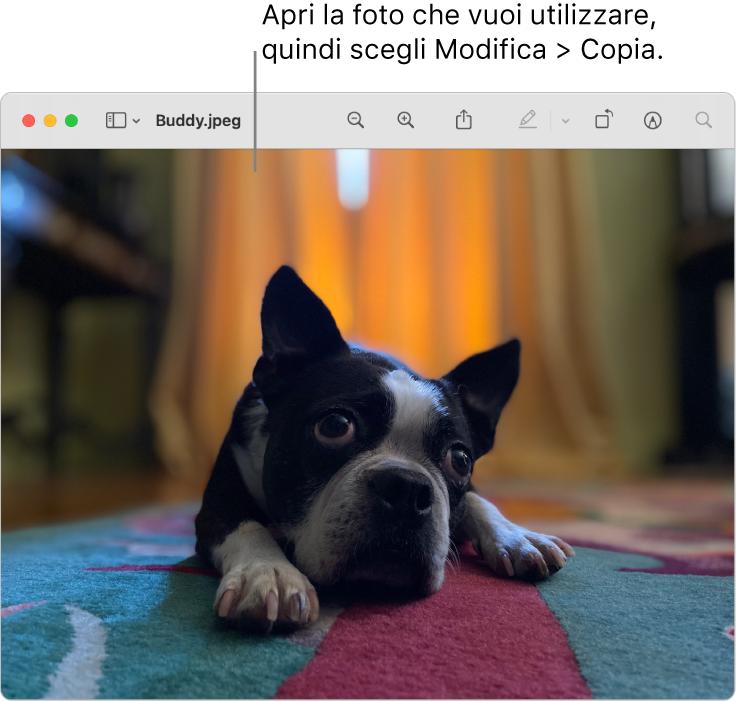 L'app Anteprima che mostra un'immagine da copiare.