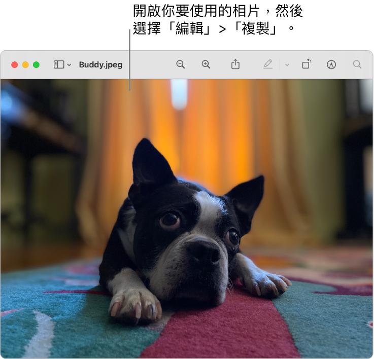 「預覽程式」App 顯示要複製的圖片。