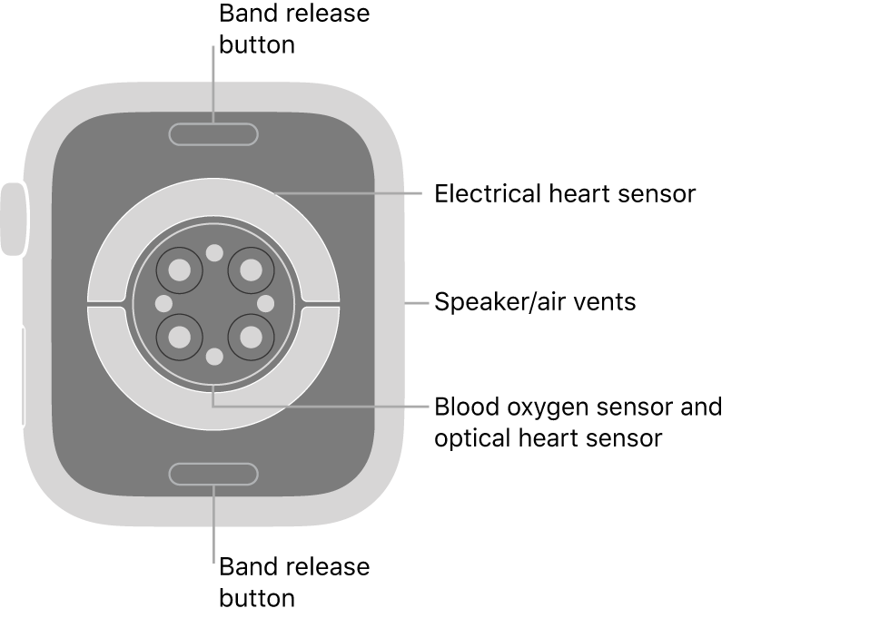 The back of AppleWatch Series7, with the band release buttons at top and bottom, the electrical heart sensors, optical heart sensors, and blood oxygen sensors in the middle, and the speaker/air vents on the side.