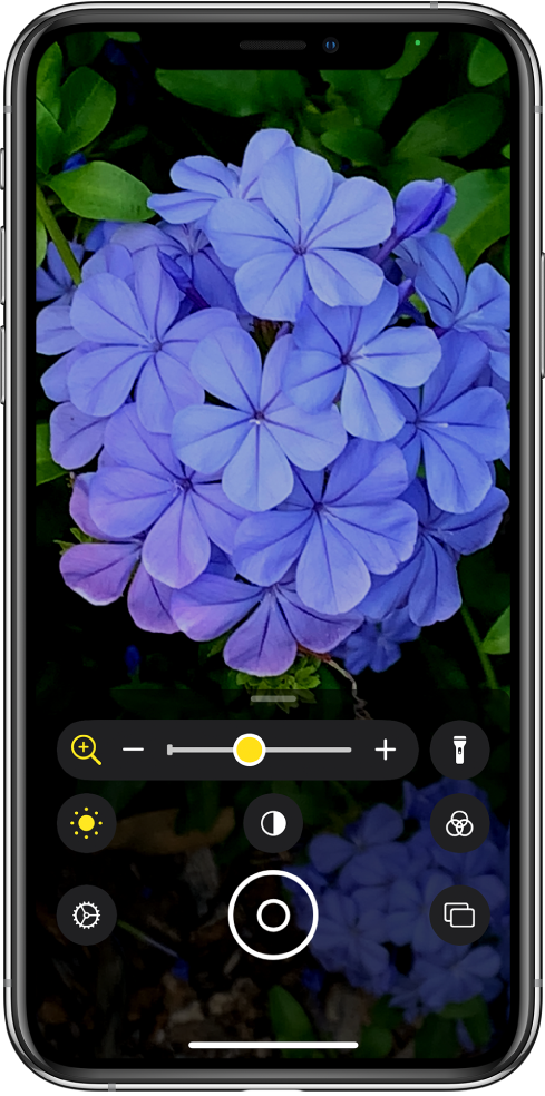 La pantalla de Lupa mostrando un acercamiento de una flor.