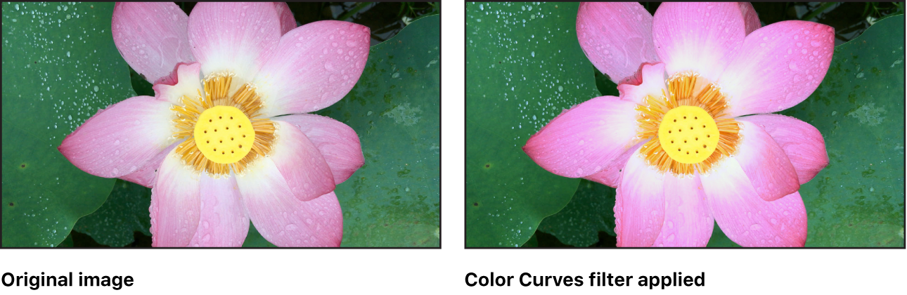 Canvas showing effect of Color Curves filter