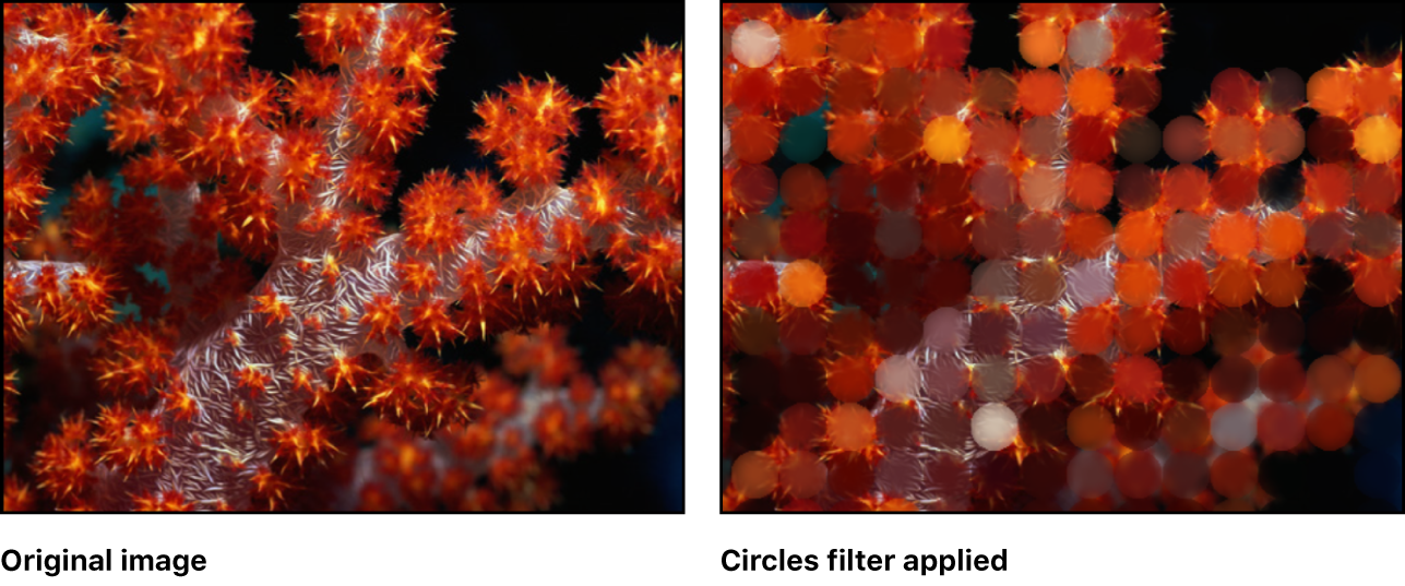 Canvas showing effect of Circles filter