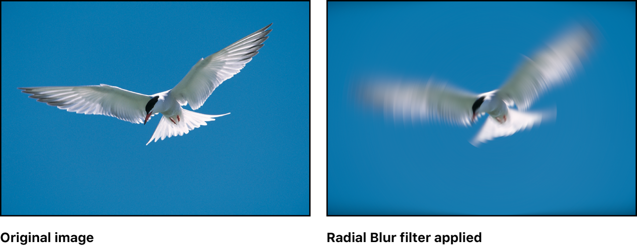 Canvas showing effect of Radial Blur filter