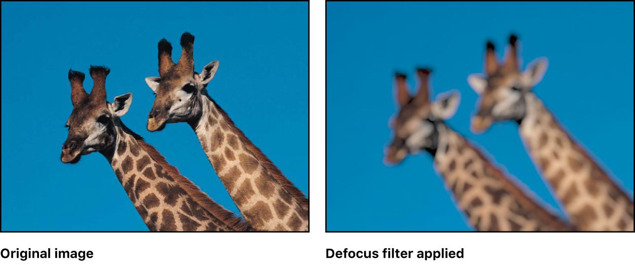 Canvas showing effect of Defocus filter