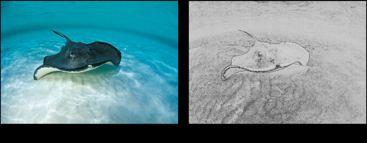Canevas affichant l'effet du filtre Dessin au trait