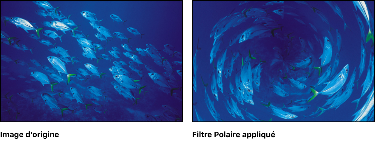 Canevas affichant l'effet du filtre Polaire