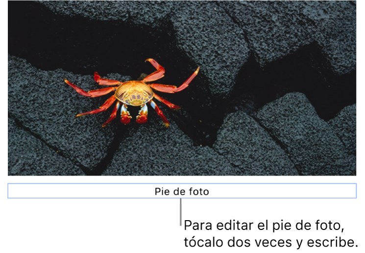 Debajo de una foto aparece el marcador de posición del pie de foto; un contorno azul que rodea el campo de pie de foto indica que está seleccionado.