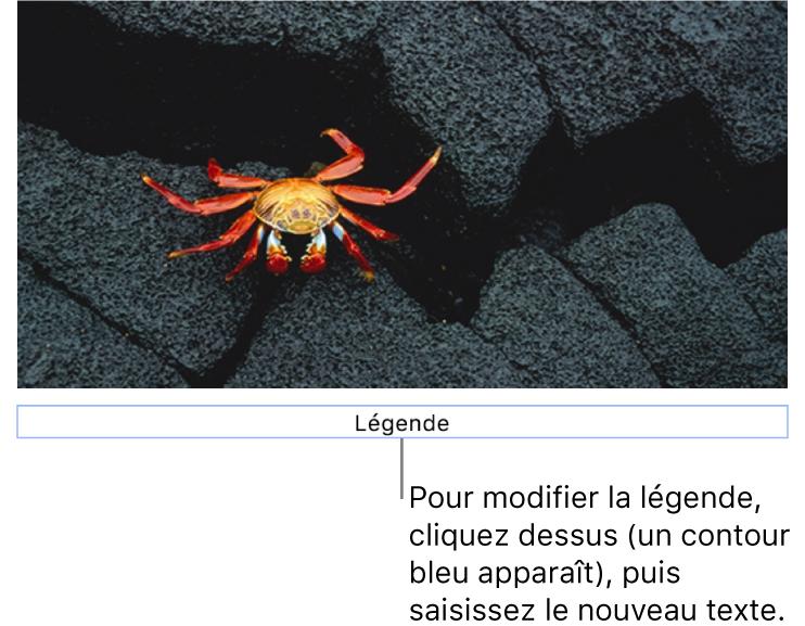 Le paramètre fictif de légende, «Légende», est affiché sous une photo. Un contour bleu autour du champ de la légende indique qu'il est sélectionné.
