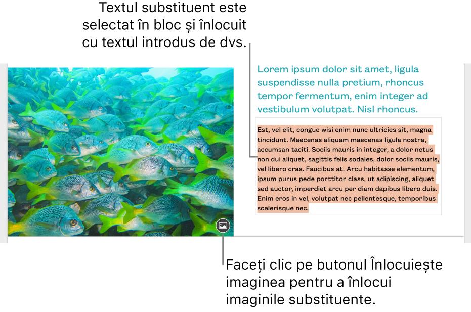 Text și imagini substituente.