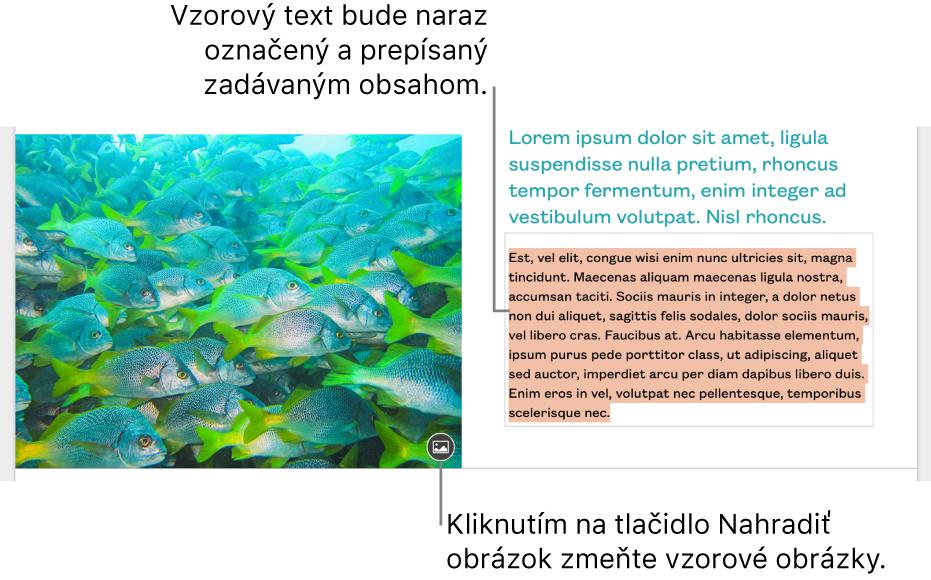 Vzorový text aobrázky.