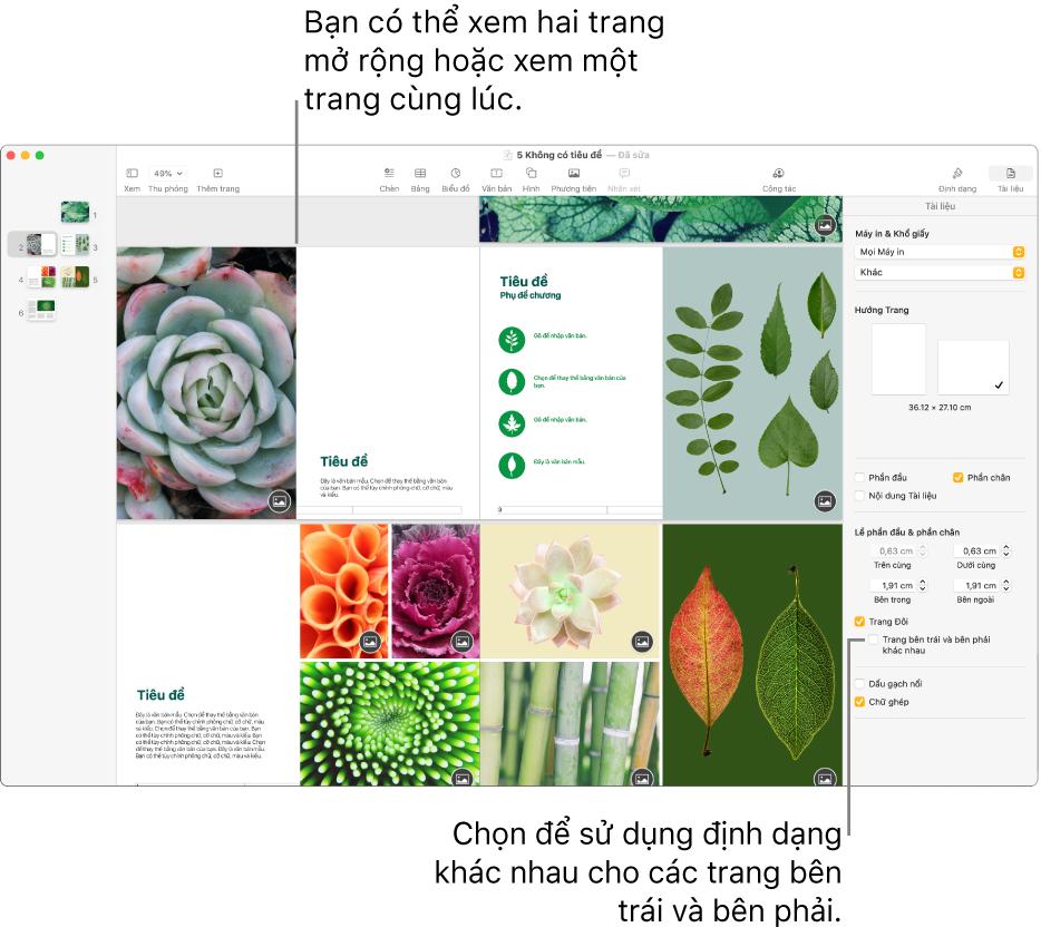 """Cửa sổ Pages với các hình thu nhỏ của trang và các trang tài liệu được xem dưới dạng bản in hai trang. Trên thanh bên Tài liệu ở bên phải, hộp kiểm """"Trang bên trái và bên phải khác nhau"""" được chọn."""