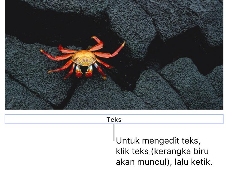 """Teks placeholder, """"Teks"""", muncul di bawah foto; kerangka biru di sekitar bidang teks menampilkan bahwa objek dipilih."""