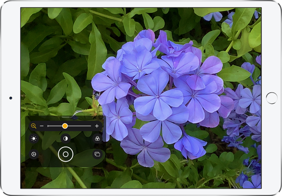 La pantalla de la lupa muestra un primer plano de una flor.
