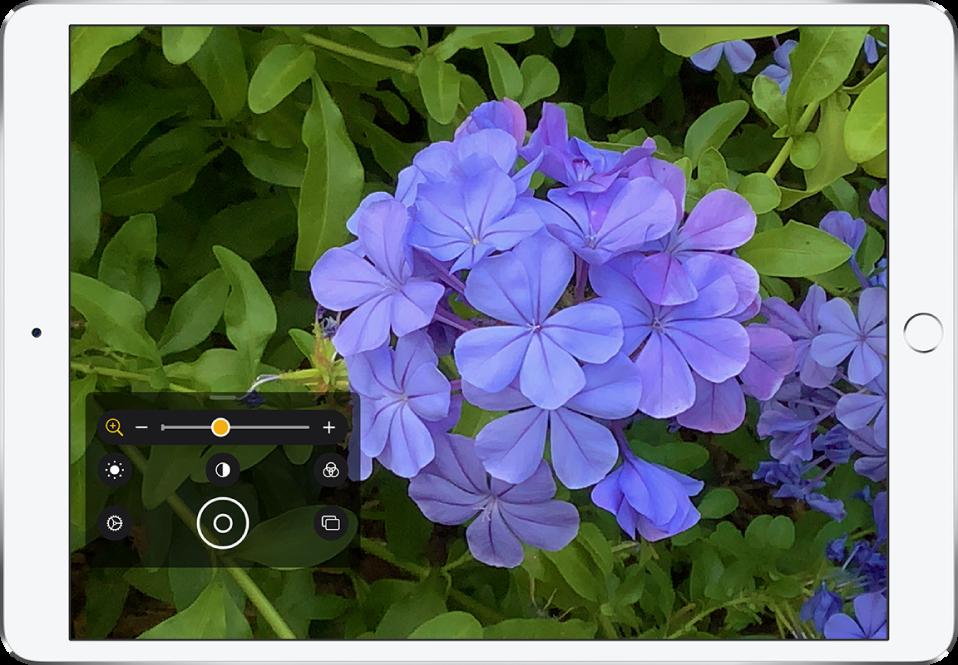 """Schermata di """"Lente di ingrandimento"""" che mostra il primo piano di un fiore."""