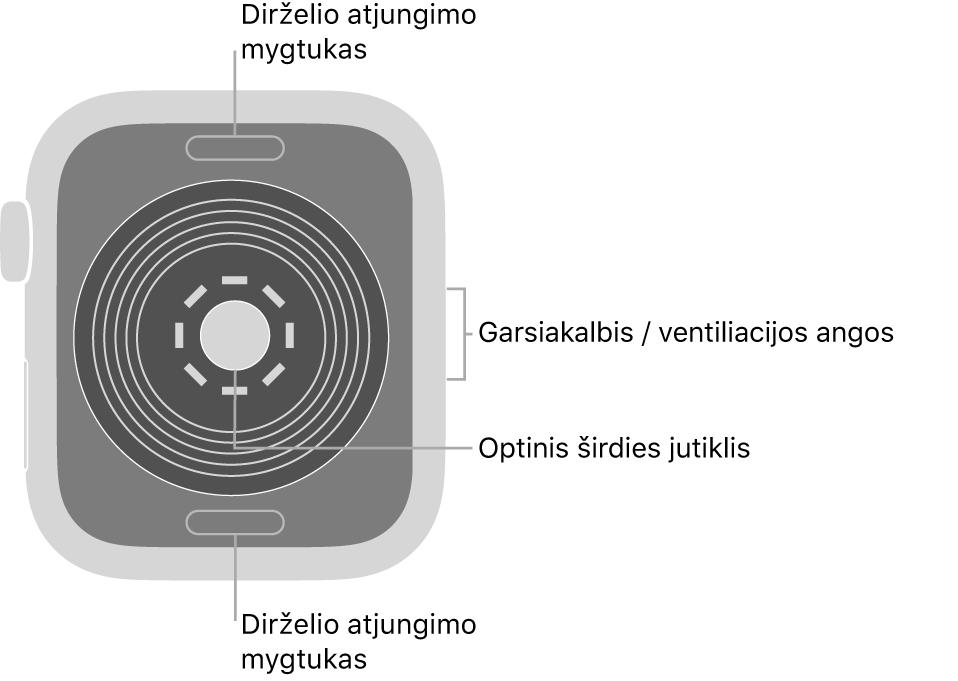 """""""Apple Watch SE"""" galinė pusė, dirželio atjungimo mygtukai viršuje ir apačioje, optinis širdies jutiklis viduryje ir garsiakalbis / ventiliacijos angos šone."""
