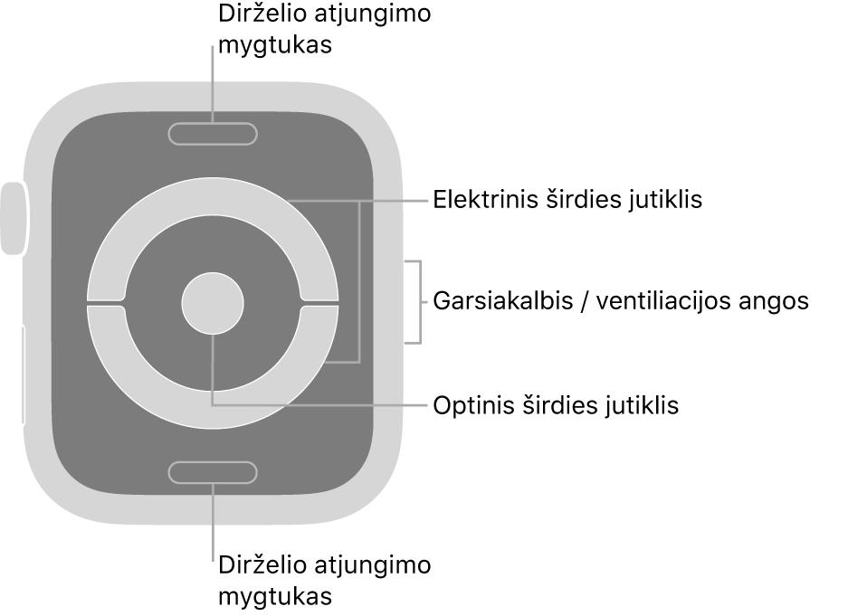 """""""AppleWatch Series 4"""" ir """"AppleWatch Series 5"""" galinė pusė, dirželio atjungimo mygtukai viršuje ir apačioje, elektriniai širdies jutikliai ir optinis širdies jutiklis viduryje bei garsiakalbis / ventiliacijos angos laikrodžio šone."""