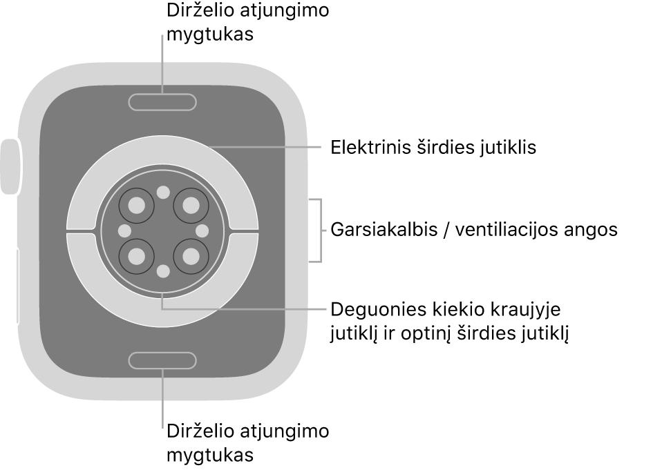 """""""Apple Watch Series 6"""" galinė pusė, dirželio atjungimo mygtukai viršuje ir apačioje, elektriniai širdies jutikliai, optiniai širdies jutikliai ir deguonies kraujyje matavimo jutikliai viduryje bei garsiakalbis / ventiliacijos angos šone."""