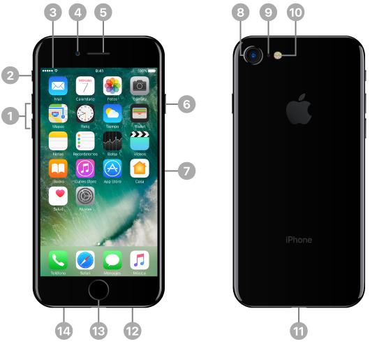 El iPhone visto desde arriba, por delante, desde abajo y por detrás. El texto de las imágenes indica los botones físicos y otras prestaciones, como por ejemplo, el interruptor de tono/silencio y los botones de volumen a un lado, el botón de activación/reposo y la bandeja de la tarjeta SIM al otro, y el conector Lightning, el altavoz y los micrófonos en la parte inferior. En la parte superior de la cara delantera se encuentra la cámara delantera FaceTime y el receptor/micrófono frontal/altavoz. El botón de inicio está en la cara delantera (en el centro de la parte inferior). En la parte posterior, arriba, se encuentra la cámara trasera, el micrófono trasero y el flash de tonos naturales. La pantalla ocupa prácticamente todo el frontal. En esta ilustración, se muestra la pantalla de inicio principal con sus apps y la barra de estado en el borde superior.