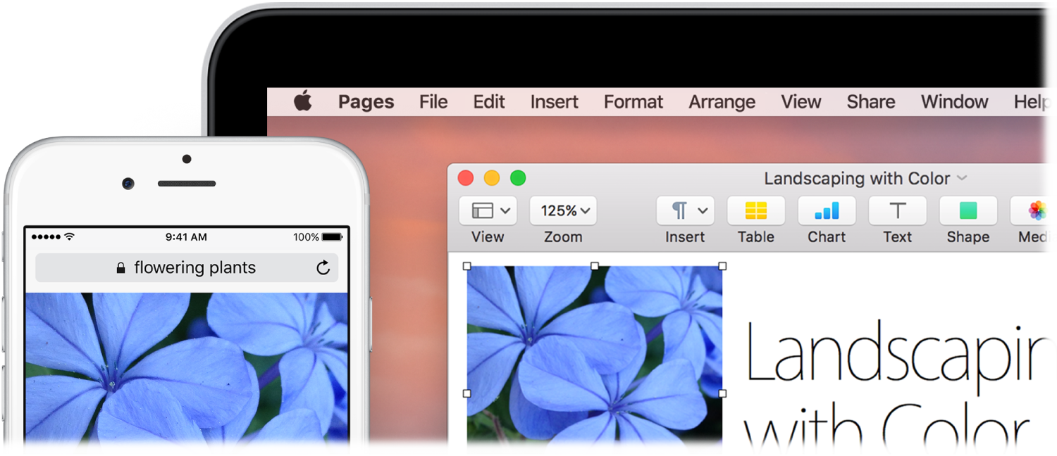An iPhone displaying an illustration of a flowering plant, next to a MacBook showing that illustration being pasted into a Pages document.